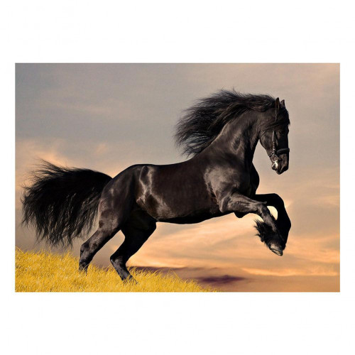 Diamond painting - Black Horse No. 23