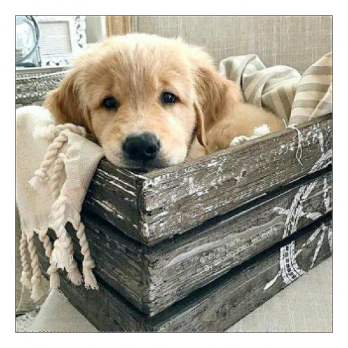 Diamond painting - Puppy in box no.47